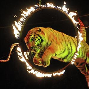 Цирки Кохмы